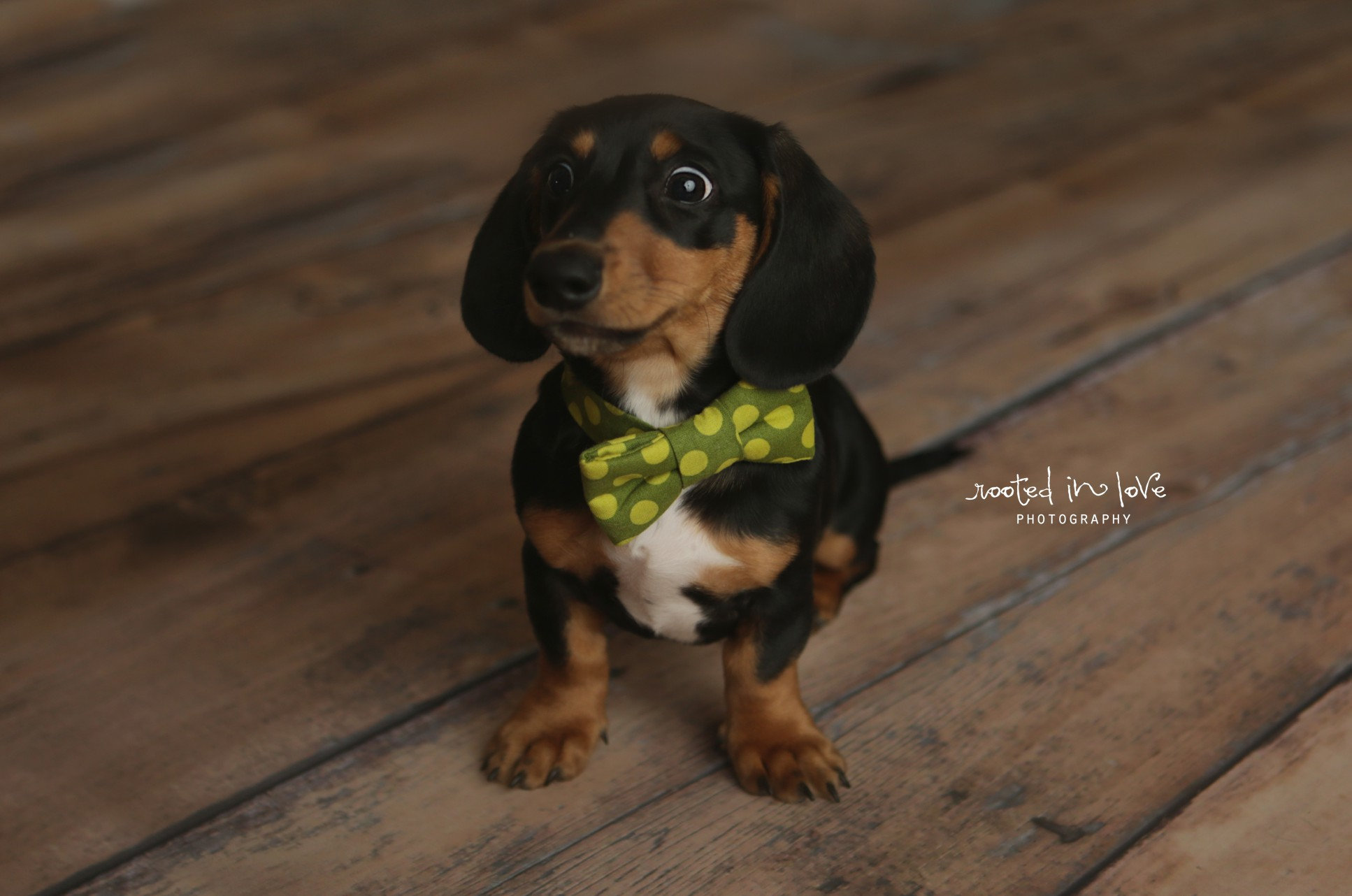 Ollie's newborn puppy session