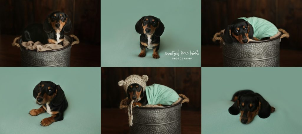 newborn puppy session