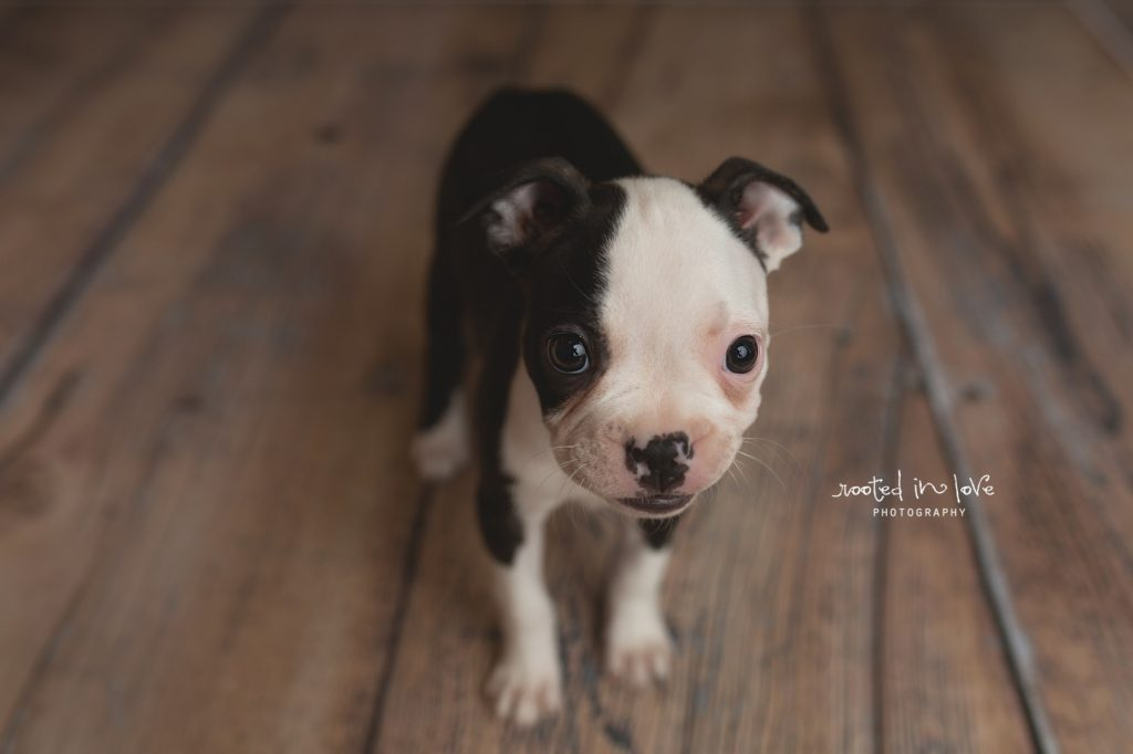 Ruby's puppy session